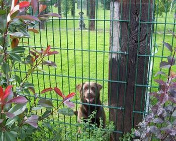 Dotty's honden- & kattenpension - Hondenpension